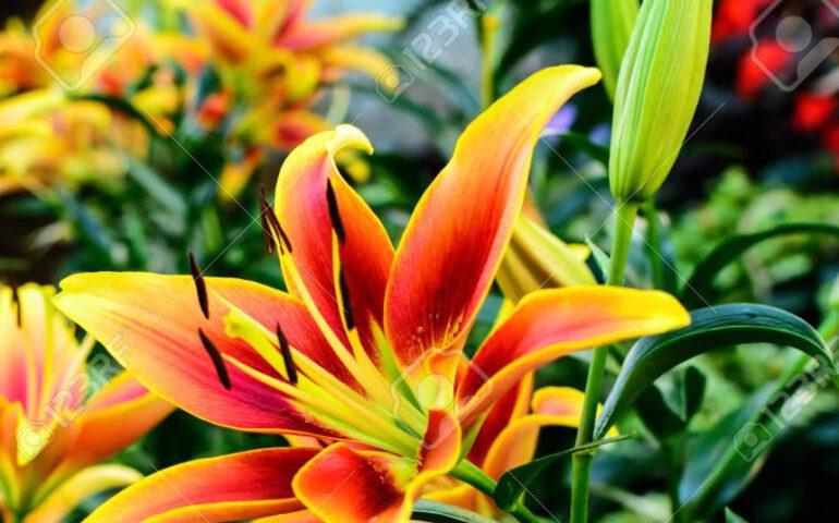 Flores para mamá (Foto: 123rf.com)